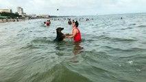 Dog Wants a Swimming Buddy