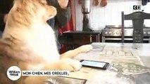 Une association se lance dans l'aide aux personnes malentendantes avec des chiens éduqués pour les aider - Regardez