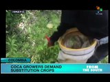 Colombia: Campesinos Urge Coca Crop Substitution