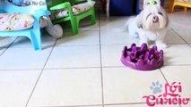 3 Formas Fáceis de Como Dar Remédio/Medicação/Suplemento Líquido Ao Seu Cachorro Ou Pet ๏ Lói Cúrcio