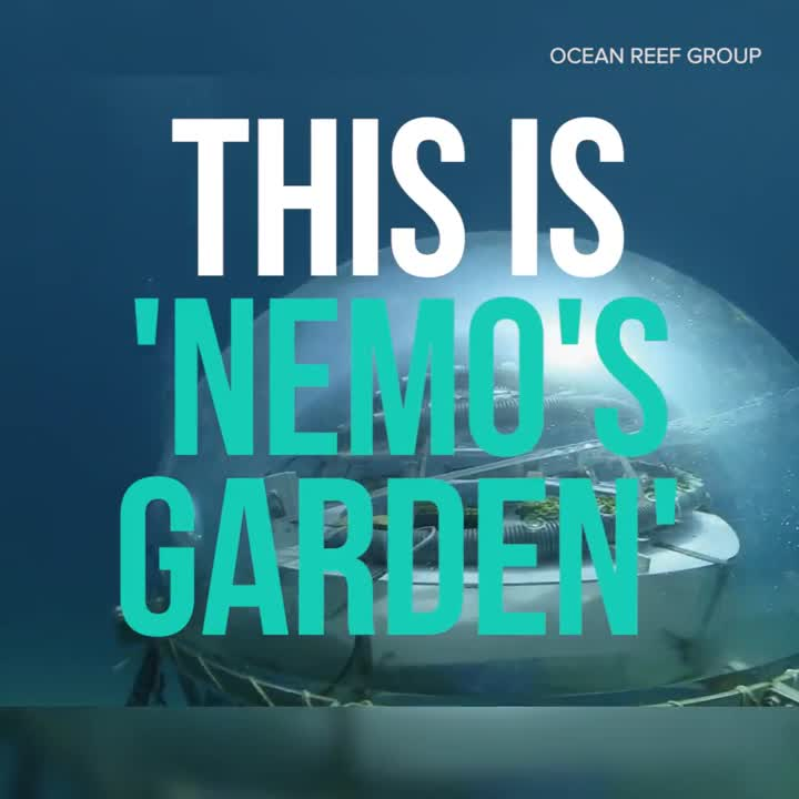 Underwater farming