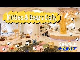 Soimilk To Go : Kitties & Bears Cafe