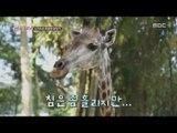 [Sightseeing throughout nations] 만국유람기 - Singapore zoo travel 싱가포르 동물원 탐방기20151021