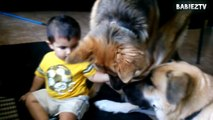Babies Playing with Big Dogs - FUNNY BABIES