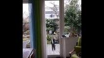 Ce chat a une drole de façon de montrer qu'il veut rentrer...