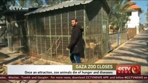 Gaza zoo animals die of hunger and diseases
