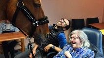 Peyo, cheval thérapeutique, cheval magique