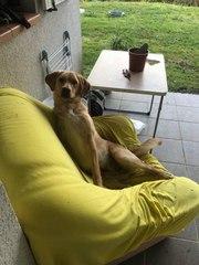 Adopte un chien : découvrez Sweety
