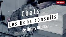 Chats : les bons conseils de Thierry Bedossa