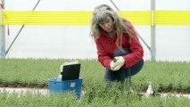 Xylella fastidiosa : la gestion d'une crise en santé des végétaux
