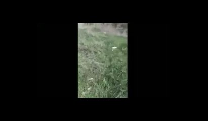 Bodrum'da Korkunç İddia: 16 Yaşındaki Çocuk Köpeğe Tecavüz Ederken Yakalandı