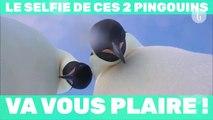 Le selfie de ces 2 pingouins va vous plaire !