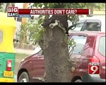 Trees in Bengaluru Make Way for Hoardings - NEWS9