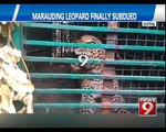 Marauding Leopard Finally Subdued in Koppal - NEWS9