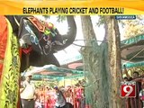 Elephants perform cool stunts - NEWS9