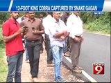 NEWS9: Medikeri, 12- foot King Cobra captured