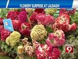 NEWS9: Bengaluru, flower surprise at Lalbagh