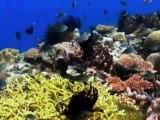 Carlos Michel Fumero y los IMPRESIONANTES Arrecifes y corales
