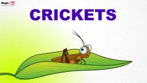 Crickets - Insects - Pre School - Learn Spelling Videos For Kids