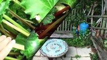Day 11 - Blenheim To Kaikoura: My Aunty's Garden, 3 Cats, Heaps Of Seals, Salad + Spa
