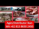 PROMO!! WA +62 813 8630 2450 Supplier Ikan Salmon Frozen  di Bekasi