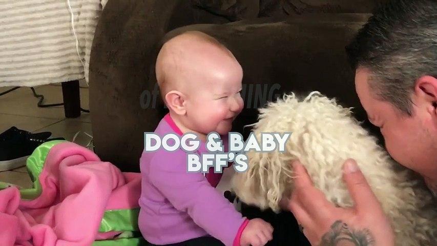 Top 10 Dog _ Baby BFFs