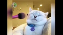 Cute and Funny Cat Videos Compilation -cute moment of the cats- Soo Cute! #2