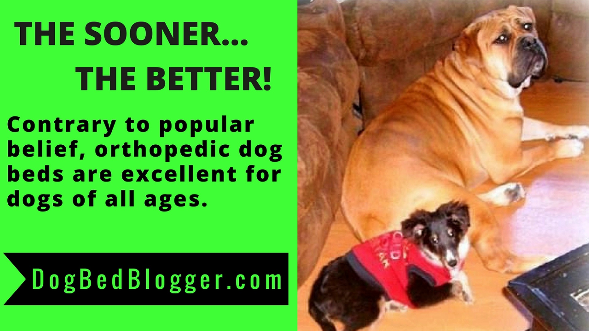 ORTHOPEDIC DOG BEDS – HOW TO CHOOSE THE RIGHT ONE