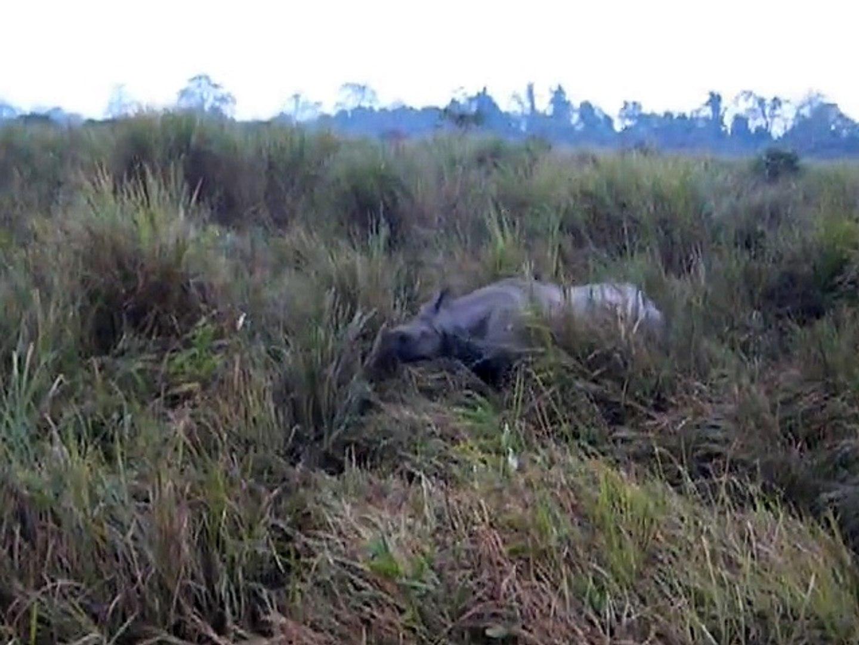 Assam Wildlife Sanctuaries   Wildlife Tour in Kaziranga
