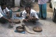 Ce charmeur de serpent se fait mordre au visage par un cobra