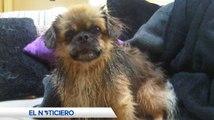 Secuestro de mascotas en Ambato