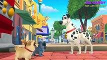 Puppy Dog Pals Animation Movies – Puppy Dog Pals Full Episodes Disney Junior – Cartoon For Kids #9