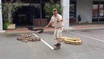 Cet homme sƞ des 3 plus gros serpents du monde