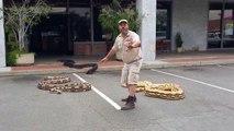 Un homme avec 3  des plus gros serpents du monde