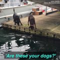 These dogs have a new friend…and it isn't another dog or a human!