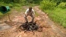 Cet homme libère des centaines de serpent et plonge les mains dans le tas... Dingue