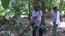 """Neues Leben für Kolumbiens """"magische Bäume"""""""