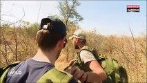 Wild : des candidats du jeu de M6 menacés par un éléphant, la vidéo choc