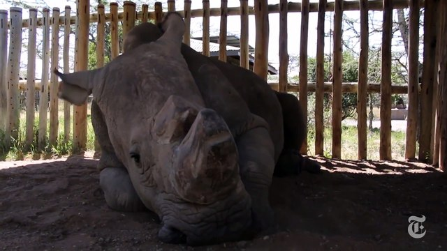 The Last Male Northern White Rhino Is Gone