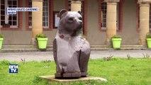Pourquoi Hulot veut réintroduire deux ourses dans les Pyrénées