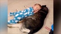 La réaction de ce chien qui voit bébé tomber de sommeil... Juste adorable