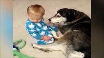 Adorable : ce bébé s'endort naturellement sur son chien