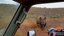 Des touristes en plein safari se font charger par un rhinocéros