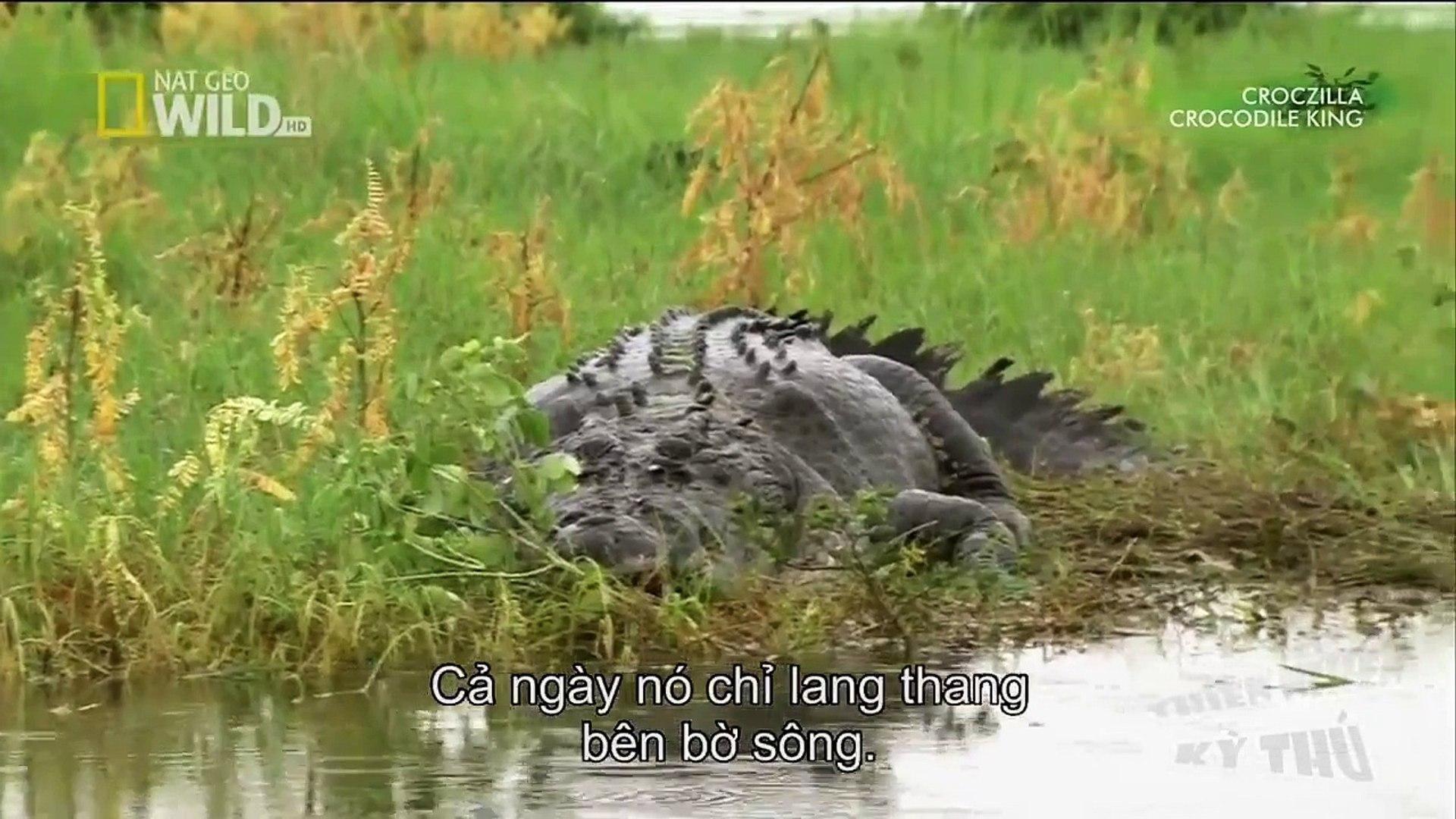 Thế Giới Động Vật - Cá Sấu Chúa