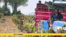 Tunisia looks up to its wine heritage to revive struggling tourism sector