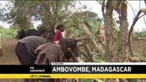 One million people at risk of hunger in Madagascar