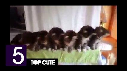 Top cute - Cats