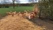 Stéphane Travert à la rencontre des poulets de Loué