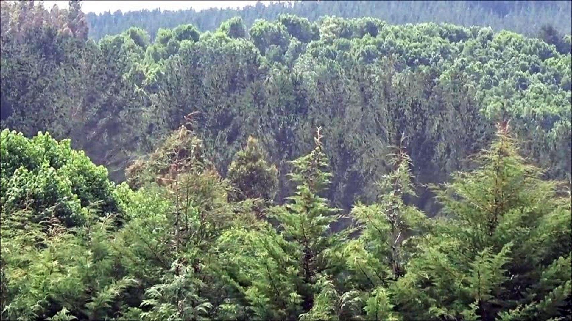 lo bosques valdiviano