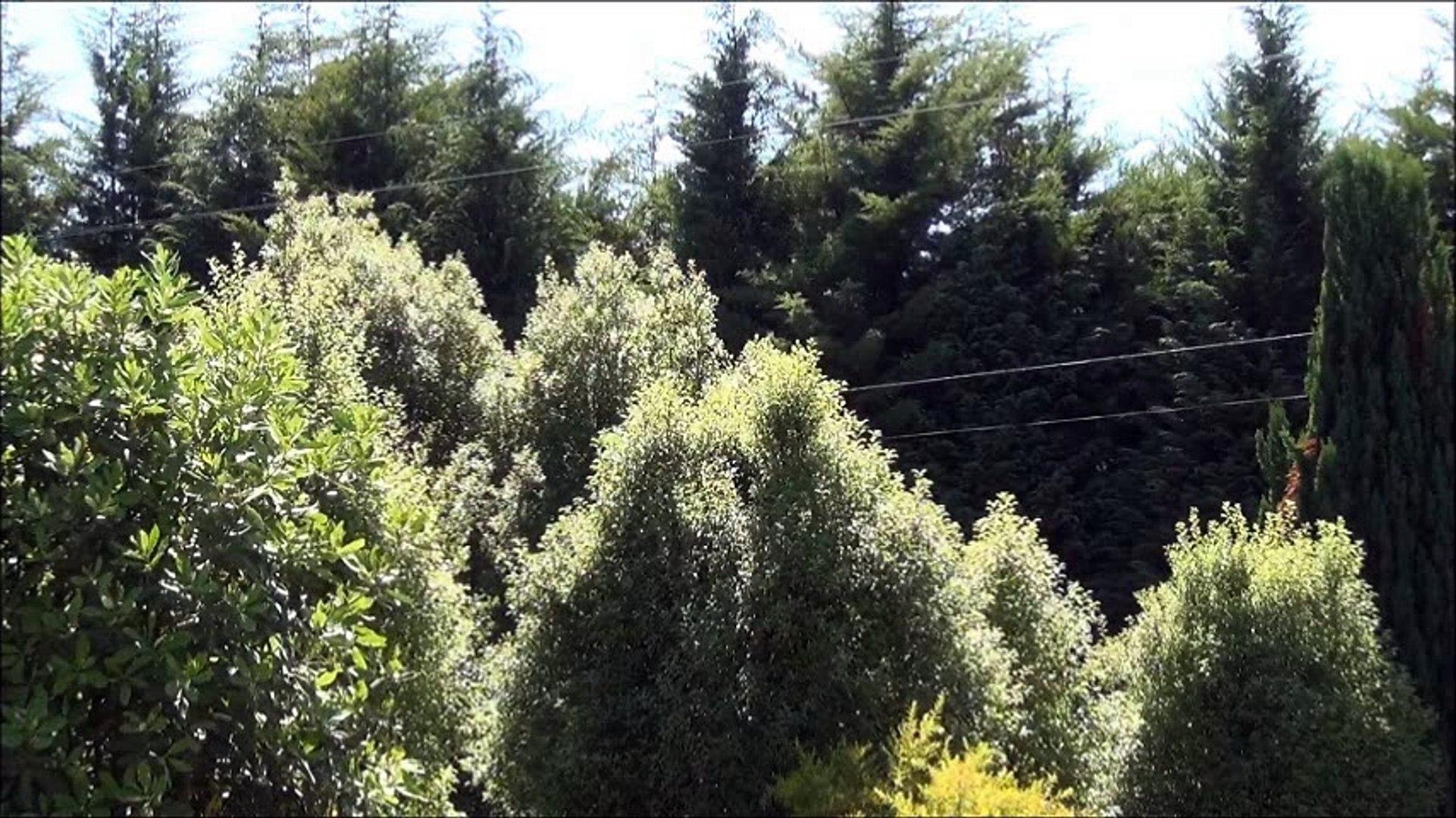 bosques valdiviano